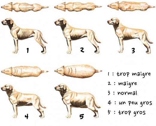 combien de repas par jour faut il donner un chien adulte direct vetdirect vet. Black Bedroom Furniture Sets. Home Design Ideas